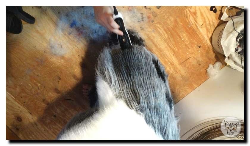 Overalls haircut