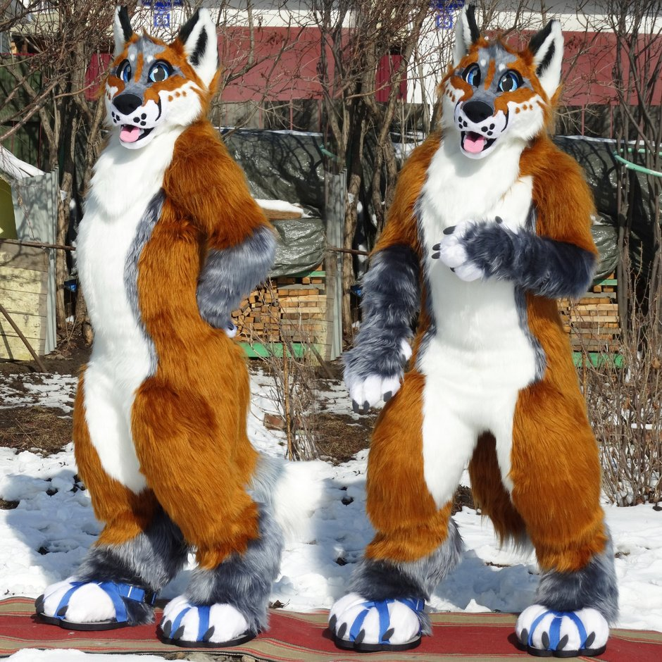 #Fox_Grey #furr_club #fursuit #Dogfursuit