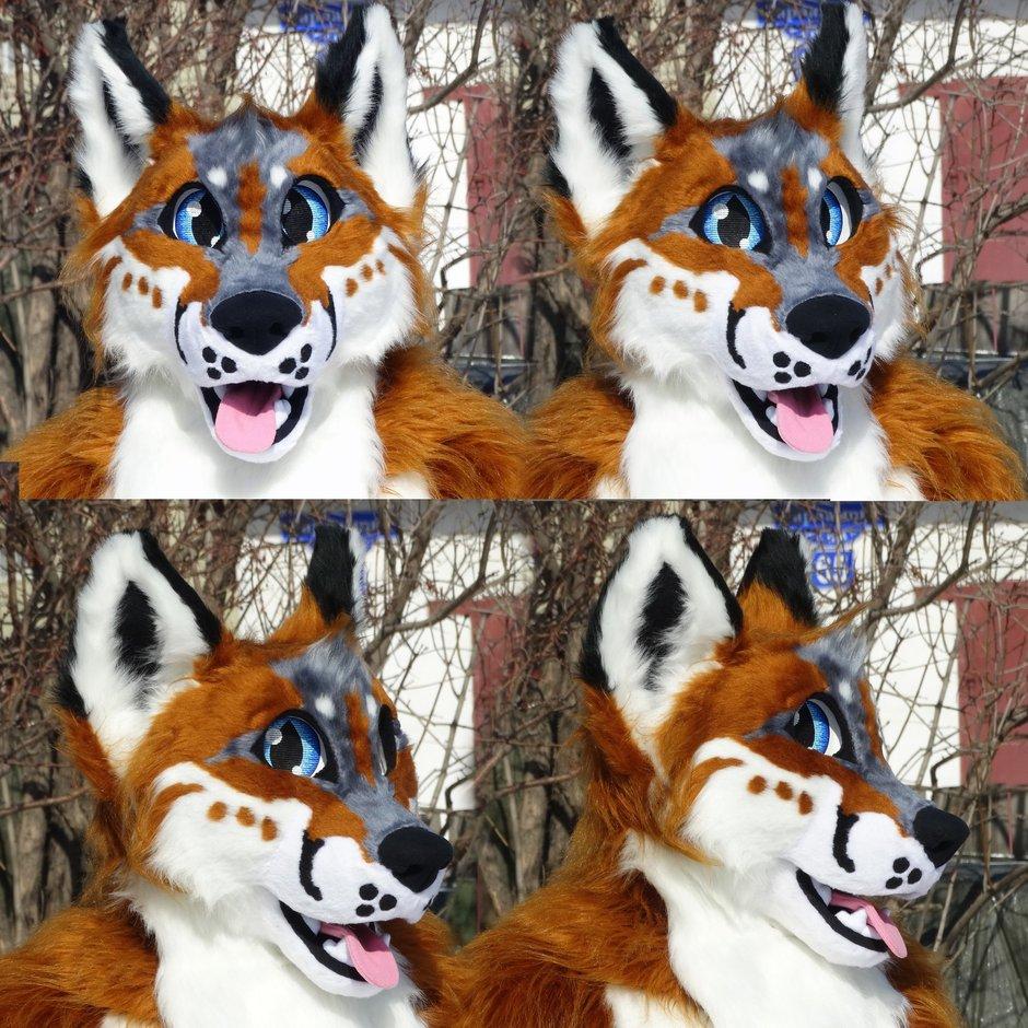 #Fox_Grey #furr_club #fursuit #Nuuki The Fox