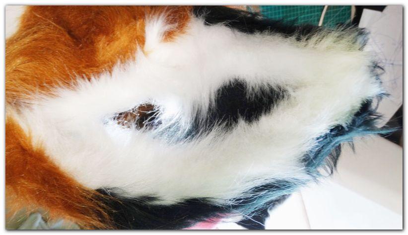 Ears #Fox #furr_club #fursuit #foxfursuit