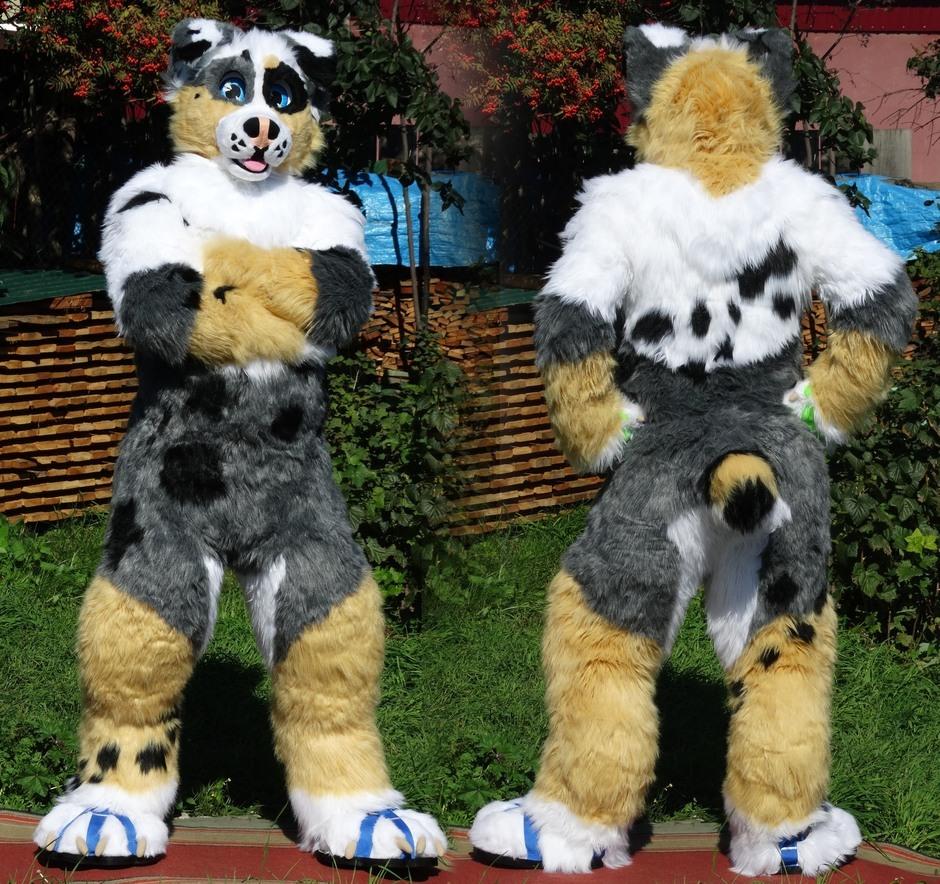 #Dog_fursuit #furr_club #fursuit #Australian Shepherd