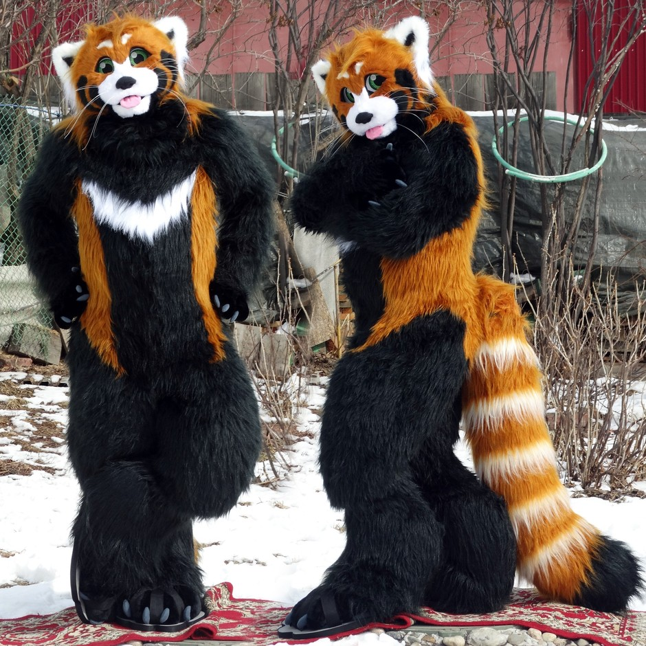 #Red_Panda_fursuit #furr_club #fursuit #Red Panda